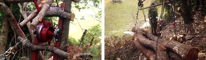 紀州備長炭の原木